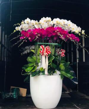 Shop hoa tươi An Nhơn Bình Định