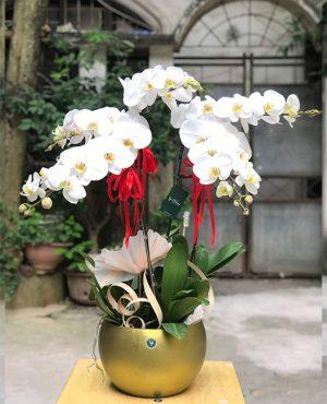cửa hàng hoa lan 24 đường thành thái phường 14 quận 10 thành phố hồ chí minh